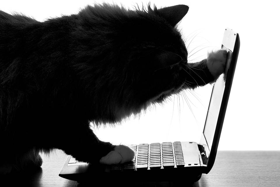 Cat opening a laptop
