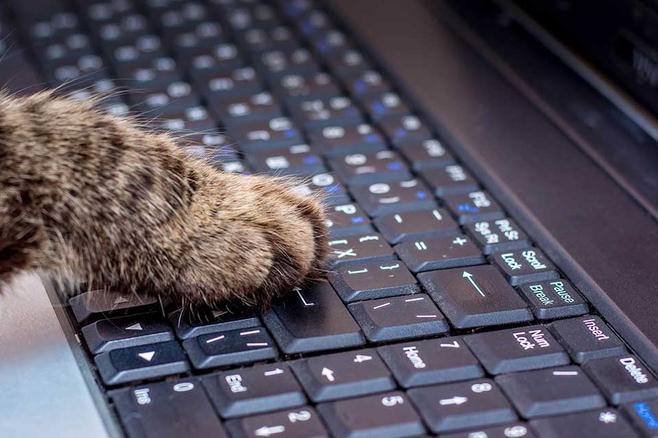 Cat paw on a keyboard